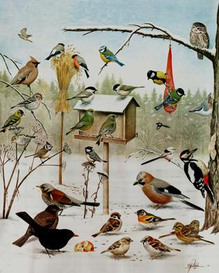 Bildresultat för skolplansch vinterfåglar